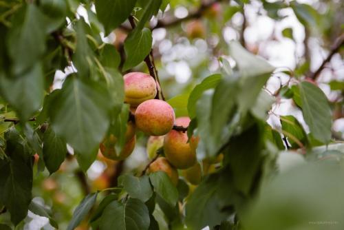 conacul-hancu-fructe-legume-proaspete-tarnaveni-sucuri-22