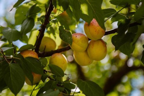 conacul-hancu-fructe-legume-proaspete-tarnaveni-sucuri-19